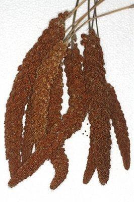 Ruvo Kolbenhirse französisch rot  15 kg