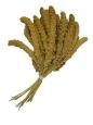 Mit Ruvo Kolbenhirse chinesisch gelb wird oft zusammen gekauft