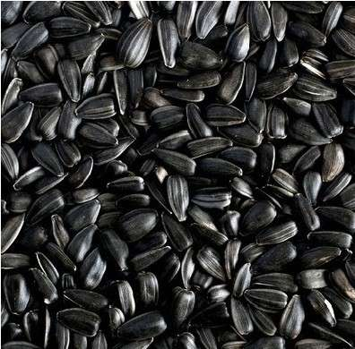 Ruvo Sonnenblumenkerne schwarz  25 kg