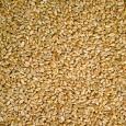Wheat Ruvo 25 kg