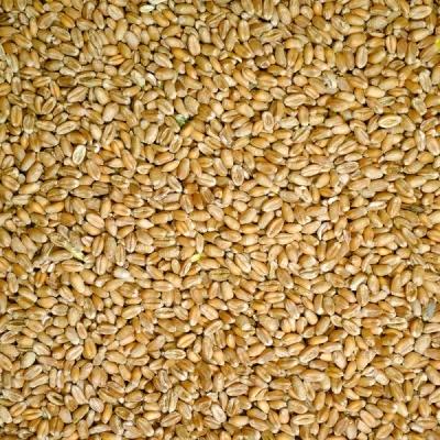 Ruvo Weizen  25 kg