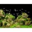 Tetra DecoArt Poster Rocks&Plants 450x600 mm