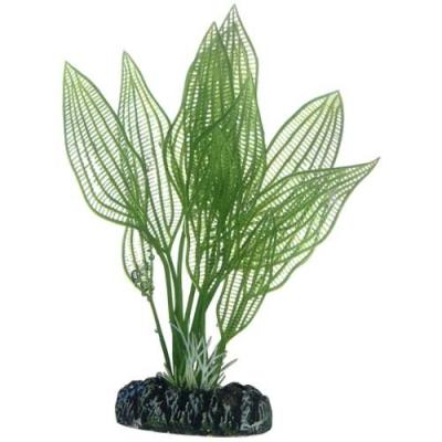 Hobby Aponogeton 16 cm Grün