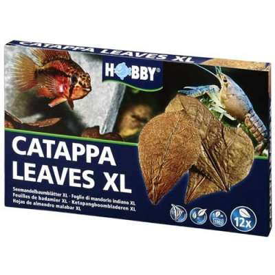 Aquaristik Dohse Catappa Leaves XL, 12 pièces