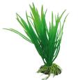 Hobby Cyperus Vert