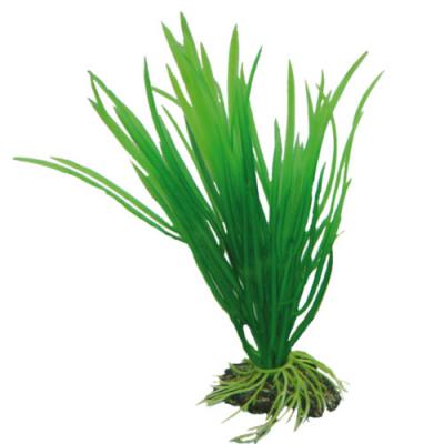 Hobby Cyperus Grün 16 cm