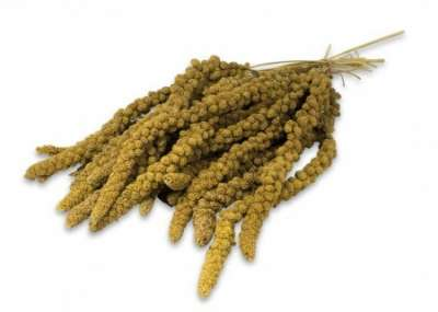 JR Farm Kolbenhirse gelb  75 g, 1 kg
