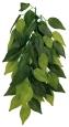Trixie Silk Hanging Plant, Ficus