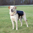 Backpack for Dogs Black Trixie 31x17 cm