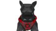 Zee.Dog Air Mesh Pettorina per cane Benji Benji  economico