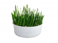 Cat Grass Rosenlöcher 150 g