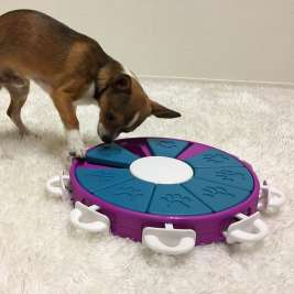 Dog Twister Level 3 von Nina Ottosson Purpur Bewertungen