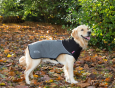 Scruffs Thermal Hundemantel Grau