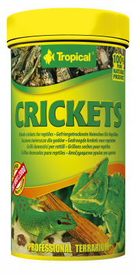 Tropical Crickets  10 g