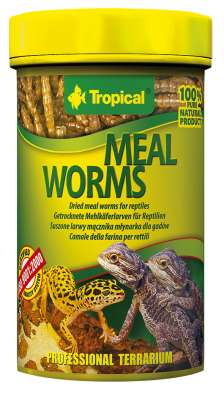 Tropical Meal Worms  30 g, 13 g