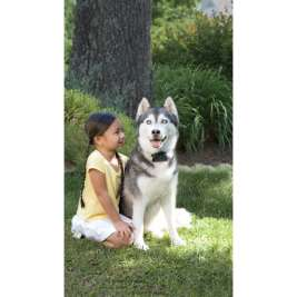 PetSafe Sistema antifuga con filo per cani ostinati In-Ground Fence  15-71 cm  negozio